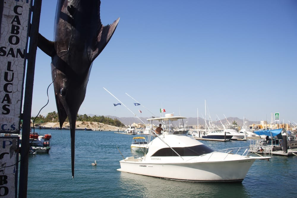 fishing charter in cabo san lucas